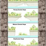 Stages in the formation of Cenote