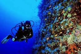 Cozumel Reef Diving