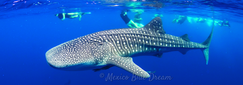 whale-shark-slide-watermark-1