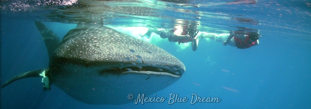 whale-shark-slider3-watermark-1